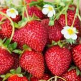 littlestrawberryhill