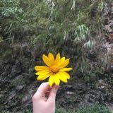 sunflowershoppp
