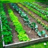 vegetableseed