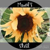 maxels_stash