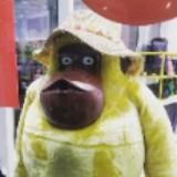 yellow_monkey