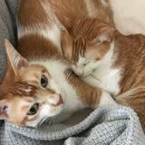 sofa_cats