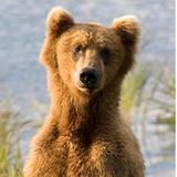 b_bear75