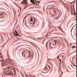 rosecoloredgal
