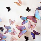 butterflypeach