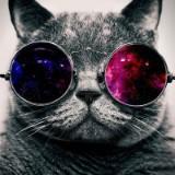 cat_nip