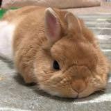 rabbitlovesshopping