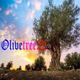 olivetree22