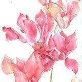 floralchecks
