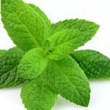 green.mint