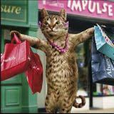 shoppingdevilcat