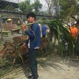 shenweijie