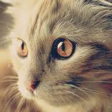 starrycat88
