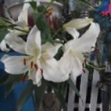 floristfun