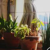 happyellowplants