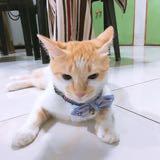 yoshibaby_