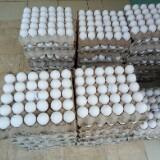 eggsandclothes