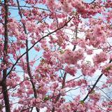 fleurclozet