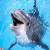 -dolphin-