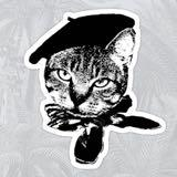 ohsassycat