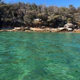 oliveshore