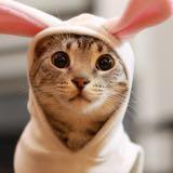 cat_shop_