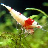 arkofshrimps