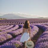 lavender.dd
