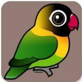 birdsupplies1