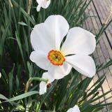 armeni.white