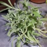 plantsdaze