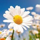 floweryflower