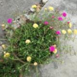 flowerrrrsss