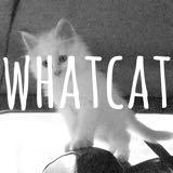 whatcat