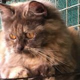 catlover1975
