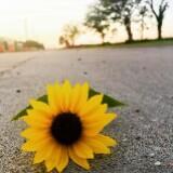 sunmn_flower