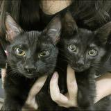 black__cats