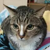 greygreycat