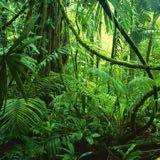 junglejj
