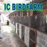 icbirdfarm547