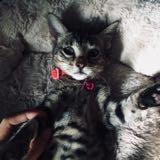 happycats_04