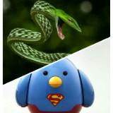 snakedoctor