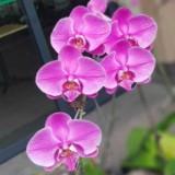 pinkpanther222