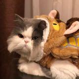 fatcatshophk