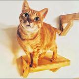 cat.lu