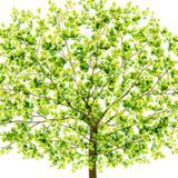 greentrees87