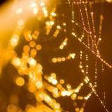 goldenthread