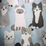 beauty_catcat