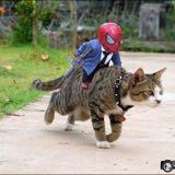 p.meow