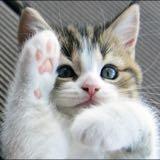 cat_addict